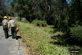 Roadside blackberries were easy to clear