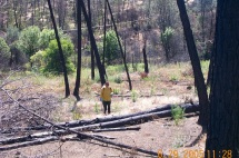 Spot spraying invasive sprouts within the burned area