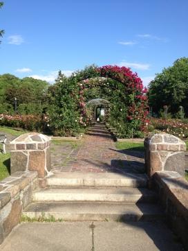 Thorndon Park Rose Garden, Syracuse, NY