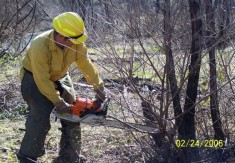 Chainsaws were necessary to remove invasive locust trees near a riparian area