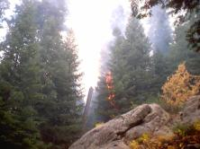 Sequoia Kings Canyon NP 037