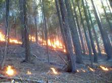 Sequoia Kings Canyon NP 039