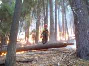 Sequoia Kings Canyon NP 049
