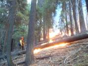 Sequoia Kings Canyon NP 053