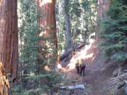 Sequoia Kings Canyon NP 063