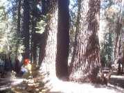 Yosemite Fires 005