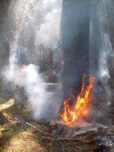 Yosemite Fires 008