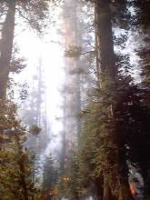 Yosemite Fires 053