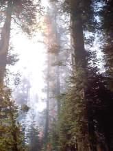 Yosemite Fires 054