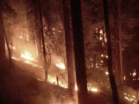 Yosemite Fires 071